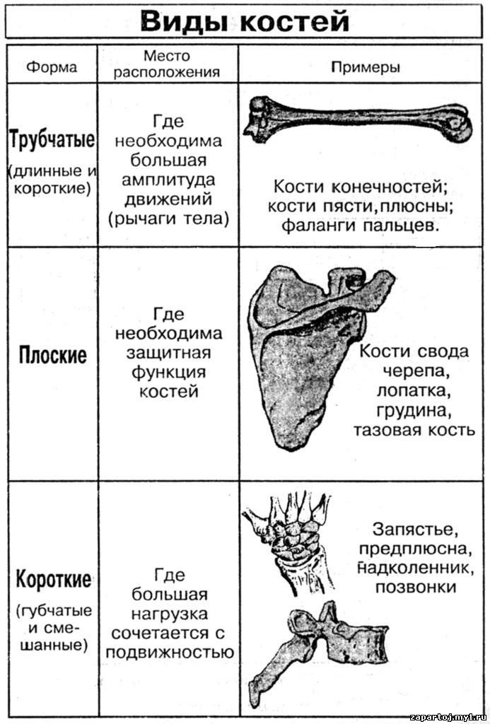 биология в таблицах биология в