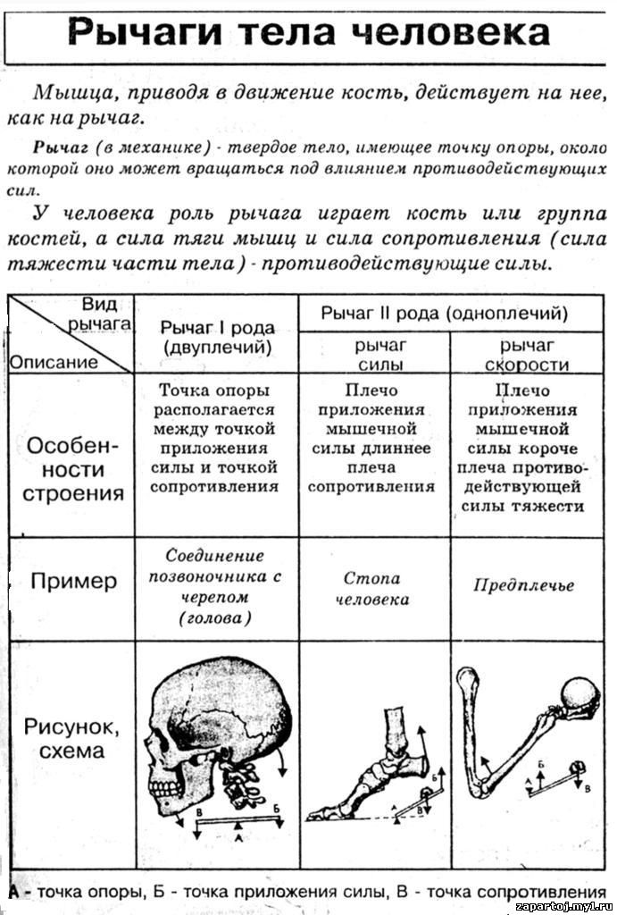 всю биологию в таблицах